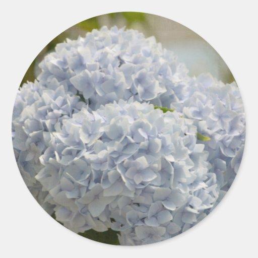 Hydrangeas azules etiqueta redonda