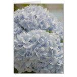 Hydrangeas azules felicitación