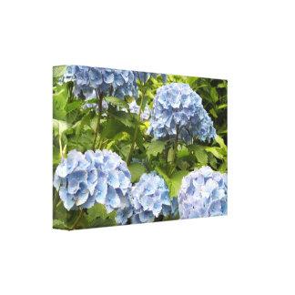 Hydrangeas azules profundos lona envuelta para galerías