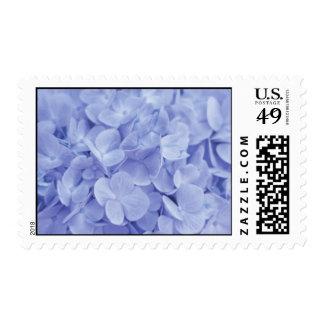 Hydrangeas azules sellos