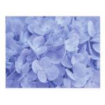 Hydrangeas azules tarjetas postales