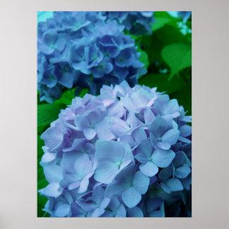 Hydrangeas {Blue} | Poster