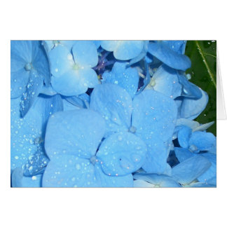 Hydrangeas CricketDiane Art,  Design & Photography Card