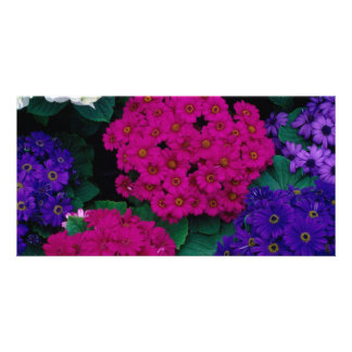 HYDRANGEAS DARK PINK PURPLES FLOWERS BEAUTY NATURE CARD