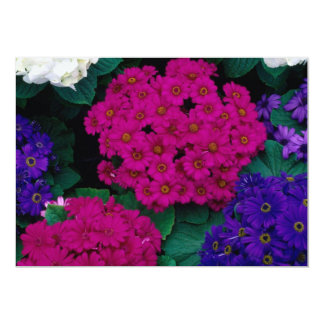 HYDRANGEAS DARK PINK PURPLES FLOWERS BEAUTY NATURE CARD