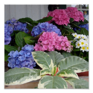 Hydrangeas de la floristería impresiones