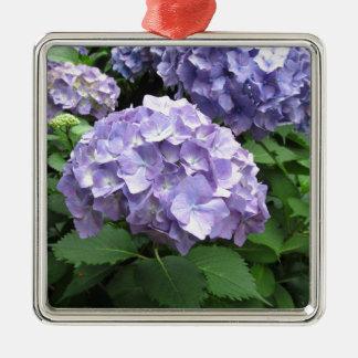 Hydrangeas en los jardines de Trebah, Cornualles Adorno Navideño Cuadrado De Metal