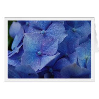 Hydrangeas Greeting Card