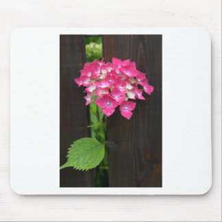 hydrangeas in bloom mouse pad