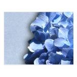 Hydrangeas ligeros y azul marino postales