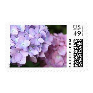 Hydrangeas Love Stamp