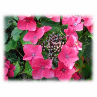 Hydrangeas. Pink Flowers. White. Statuette