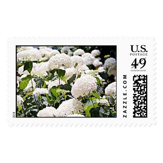 Hydrangeas Postage