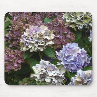 Hydrangeas púrpuras de 1 azul de la lavanda alfombrillas de ratones