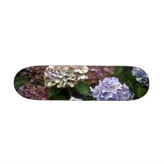 Hydrangeas púrpuras del azul de la lavanda patín