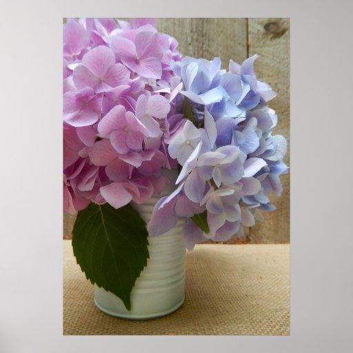 Hydrangeas púrpuras y azules en la lata blanca posters