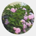 Hydrangeas rosados del ladrillo pegatina redonda