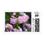 Hydrangeas rosados del ladrillo sellos