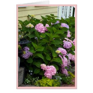 Hydrangeas rosados del ladrillo tarjetón