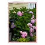 Hydrangeas rosados del ladrillo tarjeta pequeña