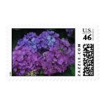 Hydrangeas U.S. Postage Stamp