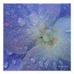 Hydrenga azul con los descensos blancos del centro arte fotografico