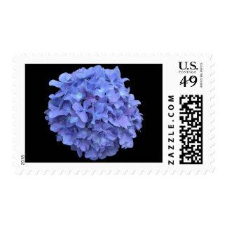 Hydrengea Postage Stamp