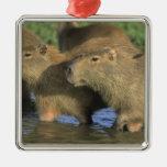 Hydrochaeris del Capybara, de Hydrochaeris), mundo Adorno Navideño Cuadrado De Metal