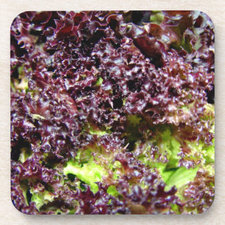 Hydroponic lettuce leaves drink coaster