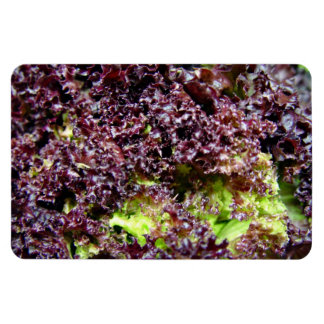 Hydroponic lettuce leaves rectangle magnet