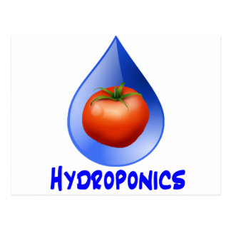 Hydroponic Tomato water drop design logo Postcard