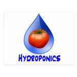 Hydroponic Tomato water drop design logo Postcards