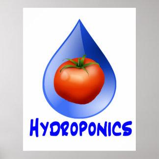 Hydroponic Tomato water drop design logo Poster