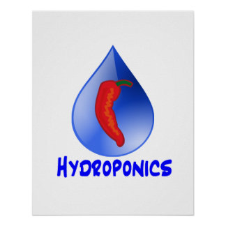Hydroponics, chili pepper, blue text design poster