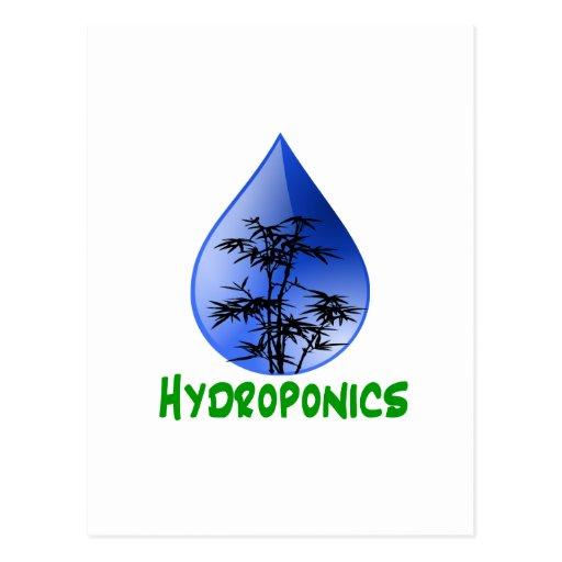 Hydroponics design-black bamboo postcard