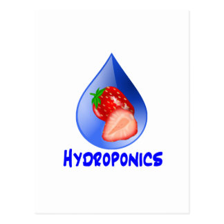 Hydroponics Design with strawberry Blue drop Postcard