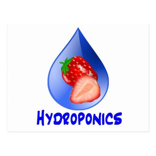 Hydroponics Design with strawberry Blue drop Postcard