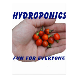 Hydroponics Fun Cascabel Hot Peppers Hand Postcard