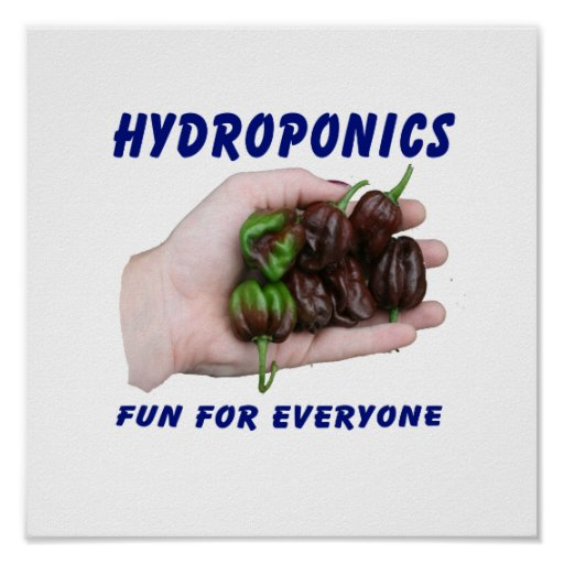 Hydroponics Fun Chocolate Habanero Peppers Poster