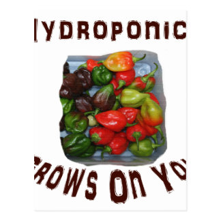 Hydroponics Grows On You Canvas Peppers Postcard