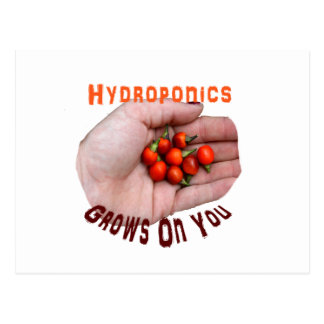 Hydroponics Grows on you Cascabel Pepper Postcard