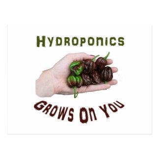 Hydroponics Grows On You Chocolate Habanero Postcard