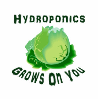 Hydroponics Grows On You Lettuce Photo Sculptures