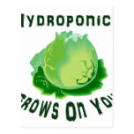 Hydroponics Grows On You Lettuce Postcards