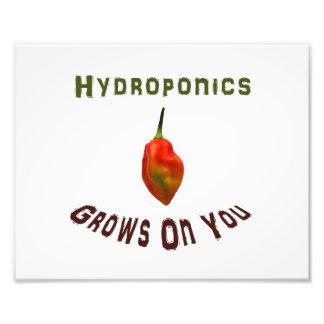 Hydroponics grows on you, single habanero pepper photo art