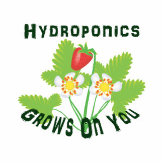 Hydroponics Grows On You Strawberries Photo Cutout