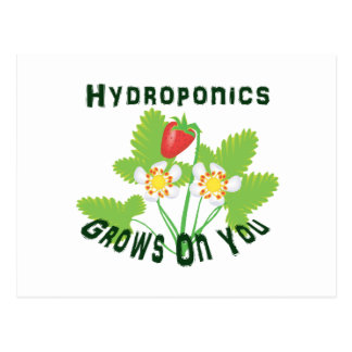 Hydroponics Grows On You Strawberries Postcard