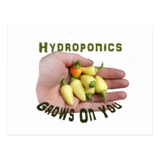 Hydroponics Grows On You White Habanero Postcard