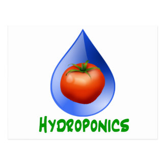 Hydroponics-Tomato, Green Text, Blue drop Postcard