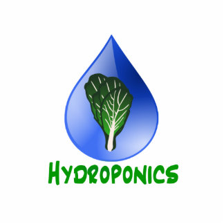 Hydroponics, water drop and lettuce Green text Photo Sculptures